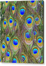 Acrylic Print featuring the photograph Peacock Feathers by Ramona Johnston