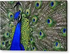 Acrylic Print featuring the photograph Peacock Head by Debby Pueschel