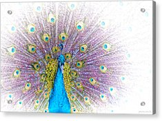 Acrylic Print featuring the photograph Peacock by Holly Kempe