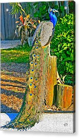 Acrylic Print featuring the photograph Peacock On The Stump by Joan McArthur
