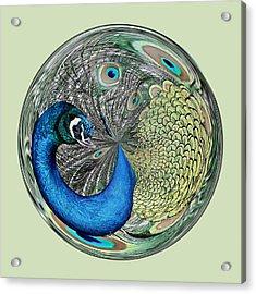 Peacock Orb Acrylic Print by Paulette Thomas
