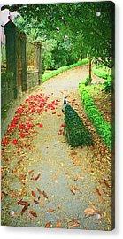 Peacock Path A Acrylic Print by Dulce Levitz