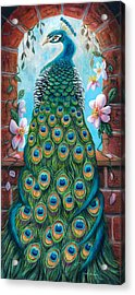 Peacock Perching In An Arch Window Acrylic Print by Shelli  Bowler