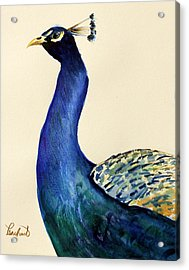 Peacock Portait Acrylic Print by Prashant Shah