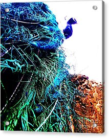 Acrylic Print featuring the photograph Peacock Portrait by Vanessa Palomino