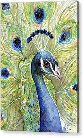 Peacock Watercolor Portrait Acrylic Print