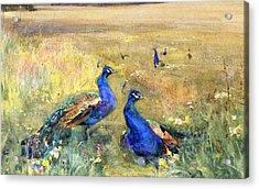 Peacocks In A Field Acrylic Print