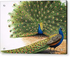 Peacocks Acrylic Print by RB Davis