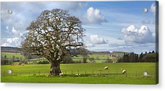 Peak District Tree Acrylic Print