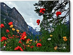 Peaks And Poppies Acrylic Print