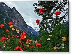 Peaks And Poppies Acrylic Print by Linda Bianic