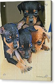 Peanuts Puppies 4 Of 5 Acrylic Print by Tom Janca