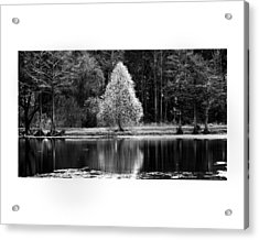 Pear Tree Acrylic Print by Jerry Cook