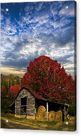 Pear Trees On The Farm Acrylic Print by Debra and Dave Vanderlaan