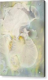 Pearl Acrylic Print by Elaine Teague