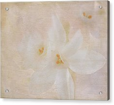 Pearl On Petals Acrylic Print