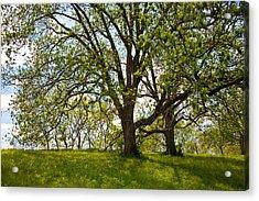 Pecan Grove Acrylic Print by Mark Weaver