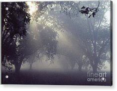 Pecan Grove On A May Morning Acrylic Print by Debbie Bailey