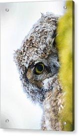 Peek A Boo Baby Owl Acrylic Print