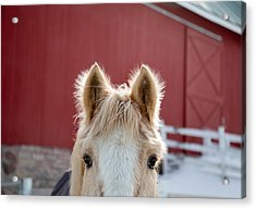 Acrylic Print featuring the photograph Peek A Boo by Courtney Webster