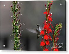 Acrylic Print featuring the photograph Peek A Boo by Judy Wolinsky