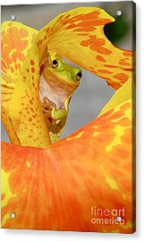 Acrylic Print featuring the photograph Peek A Boo by Kathy Gibbons