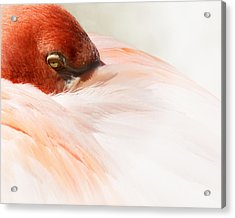 Peek-a-boo Acrylic Print by Wayne Wood