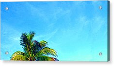 Peekaboo Palm - Tropical Art By Sharon Cummings Acrylic Print by Sharon Cummings