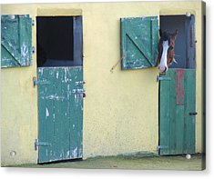 Acrylic Print featuring the photograph Peekaboo by Suzanne Oesterling