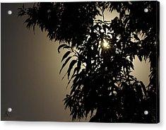 Peeking Sun Acrylic Print