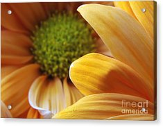 Peeking Through Acrylic Print