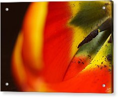 Acrylic Print featuring the photograph Peering Into The Heart Of A Tulip by Lisa Knechtel