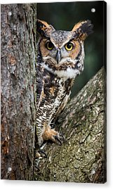 Peering Out Acrylic Print by Dale Kincaid
