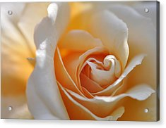 Acrylic Print featuring the photograph Pegasus Rose  by Sabine Edrissi