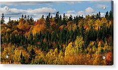 Pei Autumn Trees Acrylic Print by Matt Dobson