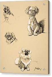 Pekes, 1930, Illustrations Acrylic Print