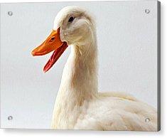 Pekin Ducks 1 Acrylic Print by Lanjee Chee