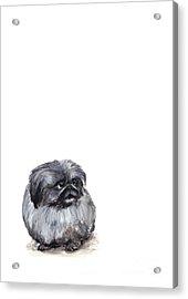 Pekingese - Pekinese Acrylic Print by Barbara Marcus