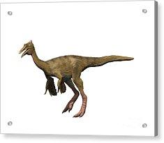 Pelecanimimus Polydon, Early Cretaceous Acrylic Print by Nobumichi Tamura