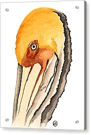 Pelican Acrylic Print by Alexandra  Sanders