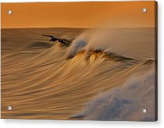 Acrylic Print featuring the photograph Pelican And Wave  Mg_6950 by David Orias
