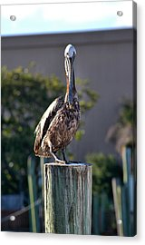 Pelican At Boat Dock Acrylic Print
