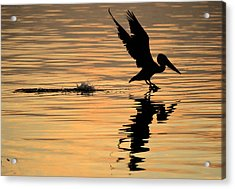 Pelican At Sunrise Acrylic Print by Leticia Latocki