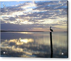 Pelican At Sunset Acrylic Print