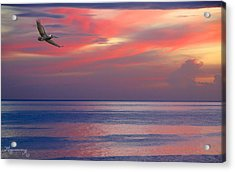 Acrylic Print featuring the photograph Pelican At Sunset by Mariarosa Rockefeller