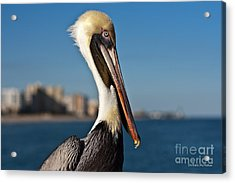 Acrylic Print featuring the photograph Pelican by Barbara McMahon