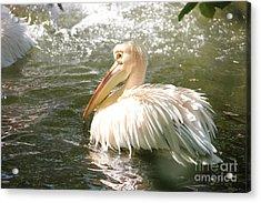 Pelican Bath Time Acrylic Print