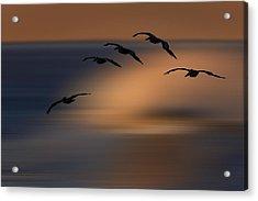 Pelican Blur  73a2324 Acrylic Print by David Orias