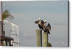 Acrylic Print featuring the photograph Pelican Buddies by John M Bailey