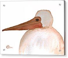 Pelican Chick Acrylic Print by Alexandra  Sanders
